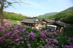 [순천] 전통 야생차 체험관  / [Suncheon] The Traditional Wild-Tea Experience Center ※ [사진제공_한국관광공사] photo by 김지호. 본 저작물의 무단전제 및 재배포를 금합니다. copyright ⓒ by Korea Tourism Organization / All pictures can not be copied without permission.