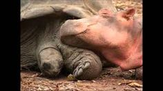 Image result for unusual animal friendships