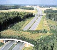 A wildlife bridge, giving animals a safe way to cross the highway.
