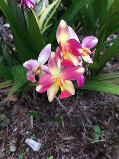 From my garden!!! Lil orquids!