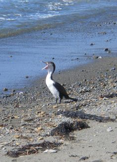 Explore and Discover Nature: A Coastal Walk - animals that I see in Pukerua Bay Citizen Science, Walking In Nature, Wild Birds, Conservation, New Zealand, Activities For Kids, Coastal, Wildlife, Environment