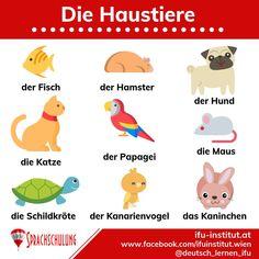 German Grammar, German Words, German Language Learning, Language Study, Deutsch Language, Study German, Learning Languages Tips, Italian Lessons, News