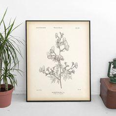 Wolfsbane, Antique botanical print, Aconite print, Instant download vintage print, Botanical art, Art print download, 8x10 print 11x14 print