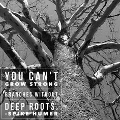 You can't grow strong branches without...