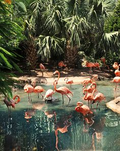 Flamingo in tropical beach lagoon. Beautiful Birds, Beautiful World, Animals Beautiful, Beautiful Places, Cute Animals, Stuffed Animals, Tier Fotos, Tropical Vibes, Belle Photo