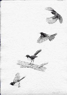 Peter Tugwell – Willy Wagtail Fitting About #inkdrawing #artcollective #sydneyartists #artsy #recycledpaper #birds #artmarkets #original #owls #Alaska #screechingowl  #sketch #sketching #draw #drawing #pencil  #galleryart #arte #illustration #artwork #artist #art #fineart #traditionalart #creative #creativity #progress Led Pencils, Pencil And Paper, Cockatoo, Artist Art, Traditional Art, Owls, Sketching, Alaska, Art Gallery
