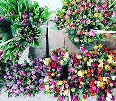 SpringYeah. #spring #love #frühling #frühlingserwachen #sonnenschein #krokusse #tulpen #narzissen #osterglocken #new #sun #flowers #tulips #colores  #himbeertortchen_koln_erftstadt #saisonopening #newseason #newlook #colorful #yeah