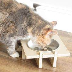 How safe is your cat's bowl?