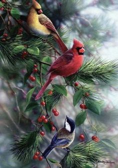 Love red birds.