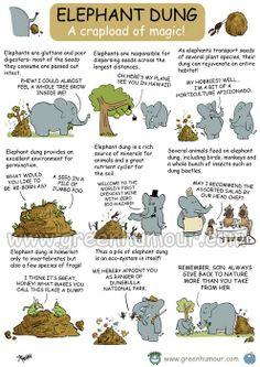 The Importance of Elephant Dung Elephant Facts, Wild Elephant, Elephant Love, Elephant Quotes, Convergent Evolution, Keystone Species, Animal Classification, Sloth Bear, Elephant Fabric