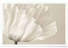 White Poppy - Iris Lehnhardt - Premium Poster