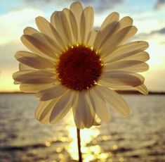 Uploaded by Mina Ilhuicamina. Find images and videos about flowers, sun and daisy on We Heart It - the app to get lost in what you love. Happy Flowers, Flowers Nature, My Flower, Beautiful Flowers, Beautiful Images, Sunflowers And Daisies, Daisy Love, Daisy Girl, Jolie Photo