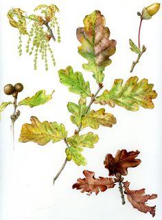 English Oak, by Christina Hart Davies