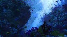 Afbeeldingsresultaat voor underwater