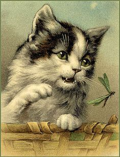 vintage postcard... #cat and dragonfly