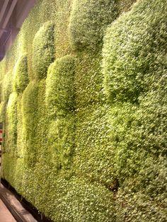 Jardines verticales del Costanera Center