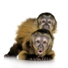 https://flic.kr/p/kG3P5t | double trouble | eSafely's Funny Monkey Pictures