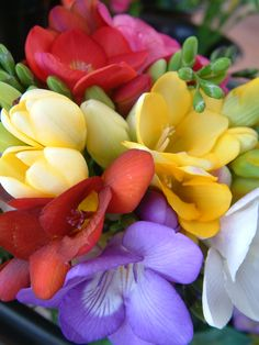 Freesia.  ABSOLUTELY LOVE the succulent, dewey-sweet scent of these flowers!!