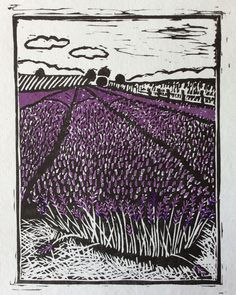 Linocut, Hitchin Hertfordshire, lavender fields with purple colour by Anjie