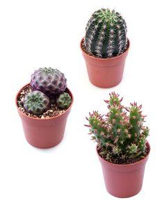 Tyylikkäät ja erittäin helppohoitoiset. Planter Pots