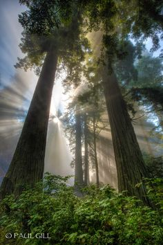 Redwood National and State Parks, California United States