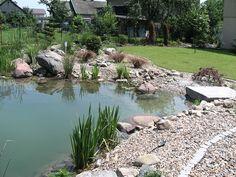 Staw naturalny (tydzień od założenia) River, Outdoor, Outdoors, Outdoor Games, The Great Outdoors, Rivers