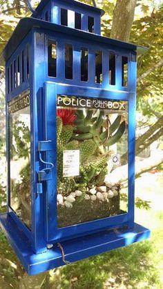 TARDIS terrariums!