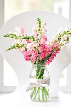 Pretty snapdragons in a simple bouquet Mason Jar Flower Arrangements, Mason Jar Flowers, Floral Arrangements, Summer Flower Arrangements, Mason Jars, Fresh Flowers, Pink Flowers, Beautiful Flowers, Snapdragon Flowers
