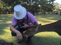 Sniffing deer at Nara Park.