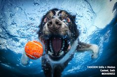 Very unique photo taken of a dog diving in a pool to retrive his ball