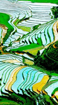 Terraced rice field in water season in Mu Cang Chai, Yen Bai province, Vietnam | 17 Unbelivably Photos Of Rice Fields. Stunning No. #15
