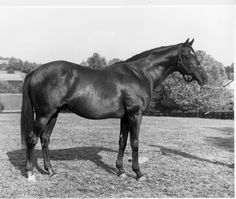Champion UK 2yo and leading UK and US sire, NASRULLAH (Ire) B h 1940, Nearco - Mumtaz Begum. Known for being temperamental, and when racing, lazy and unpredictable, he proved his worth considerably more at stud than on the track. Leading UK sire in 1951, he was a five-time leading US sire, among his get,  Bold Ruler, Nashua, Noor, Bald Eagle, Jaipur and Nasram. His desecendants include Mill Reef and Secretariat. He died in May 1959 and is buried at Claiborne Stud in Kentucky, USA.