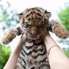 1. @instababby | 16 comptes Instagram de bébés animaux que vous devez suivre IMMÉDIATEMENT