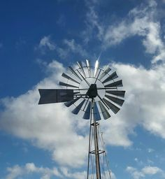 Gira mundo, gira roda, girassol