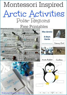 Perfect Montessori Arctic Activities with Free Printables, Penguins, Math, Language, 3 part cards and so much more. Animal Activities, Winter Activities, Activities For Kids, Preschool Winter, Montessori Toddler, Montessori Activities, Montessori Homeschool, Montessori Classroom, Classroom Ideas