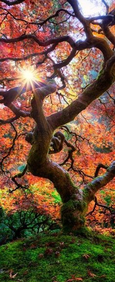 Fall at the Japanese Garden in Portland, Oregon. / 20 Landscape Photos Cropped for Pinterest / sun shining through the trees: