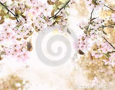 Background with cherry blossoms. collage