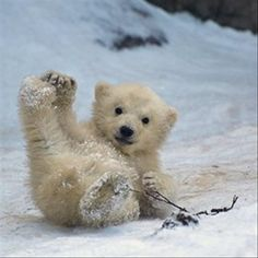 baby-bear.jpg (620×620)