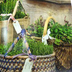 Herb Garden Baskets