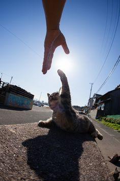 f:id:fubirai:20121230230836j:image