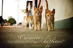 """""""Curiosity is one of the great secrets of happiness."""" - Bryant McGill"""