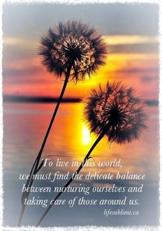 To live in this world, we must find the delicate balance between nurturing ourselves and taking care of those around us.  ― life sublime