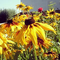 Flowers My Photos, Fruit, Flowers, Plants, Plant, Royal Icing Flowers, Flower, Florals, Floral