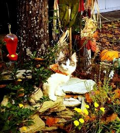 Aloha, our kitty on a beautiful fall day.