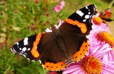 Butterfly Day, Nature, Insect