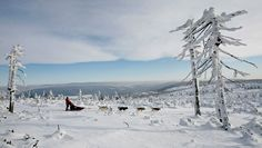 A musher rides his dog sled during the Sedivackuv Long dog sled race in Destne v Orlickych Horach, Czech Republic on January 27, 2010. Each year, racers from all over Europe arrive to the village of Destne in the Orlicke mountains in the Czech Republic to take part in this race series. (REUTERS/David W Cerny)