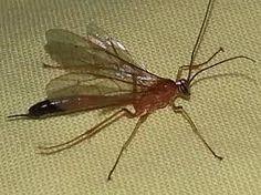 hyönteiset - Google-haku