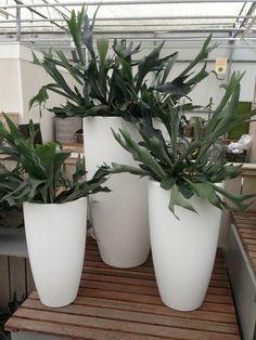 Grote kamerplanten | Grote plantenbakken | Chicplants