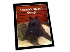 """Shared Project--My scrapbook page of """"Amanda's """"Dude"""", George"""""""