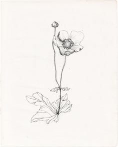 wildflower drawing | Tumblr